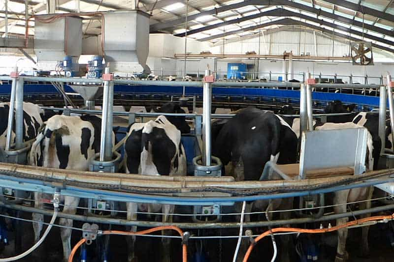EIO Dairy Cow Mastitis Detection
