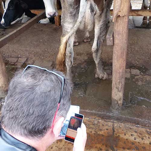 Kenya Dairy Cow Mastitis Screening